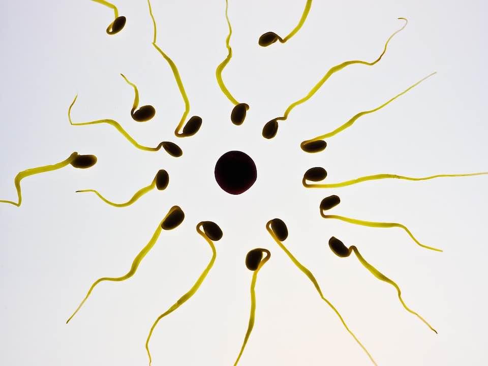 ovulaatio oireet