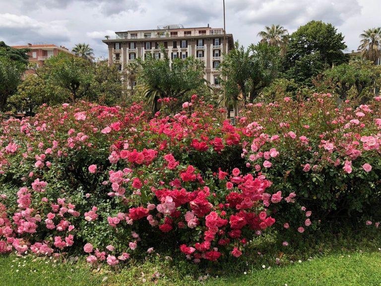 kukkia italiassa