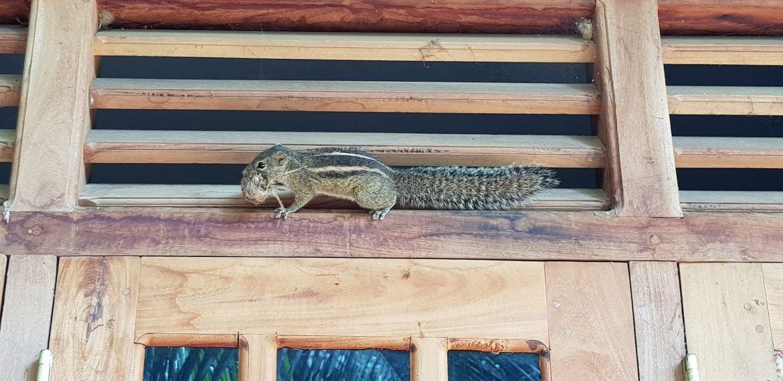 sri lanka lasten kanssa orava