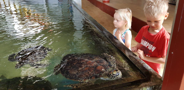 tortoise farm sri lanka lasten kanssa
