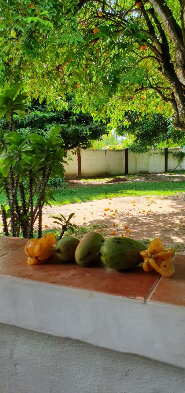 Seychellit Mahe