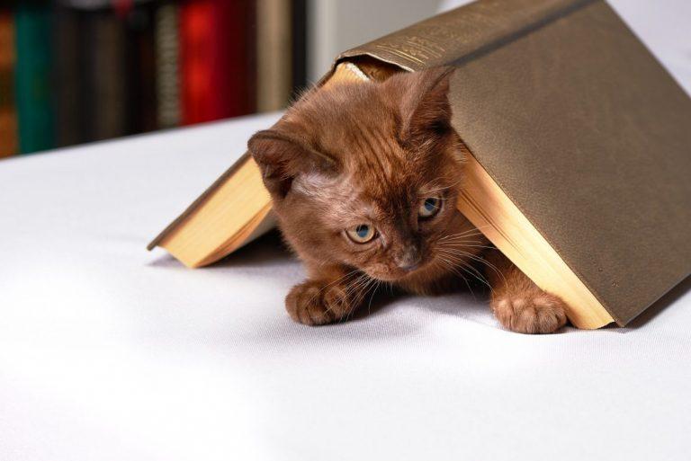 kissa ja kirja
