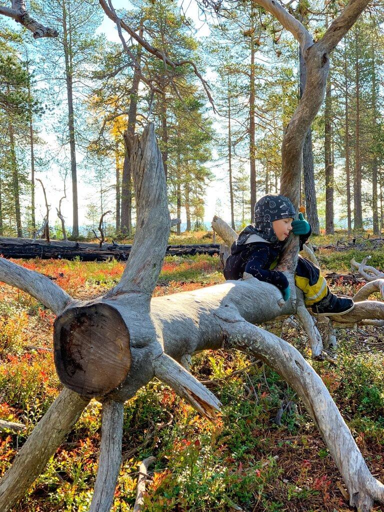poika metsassa