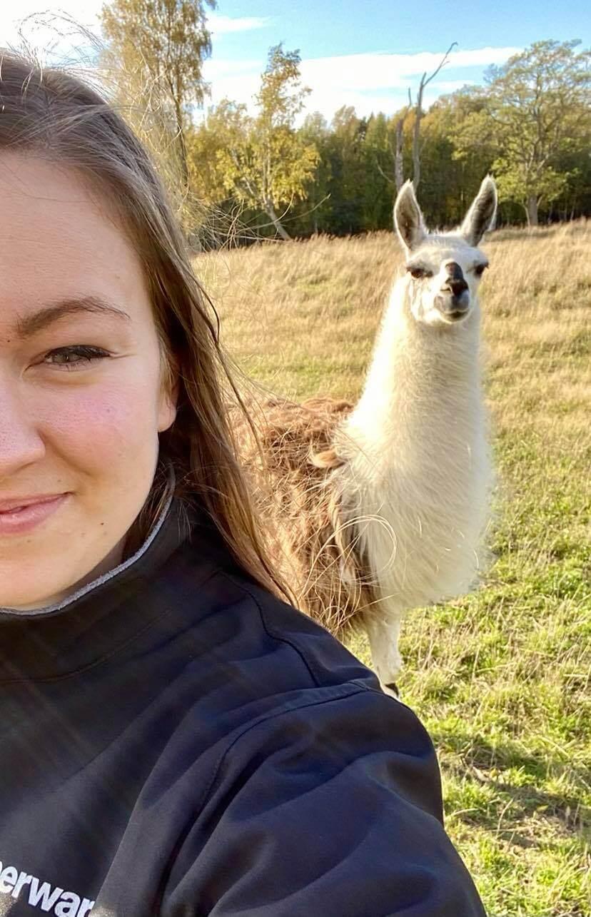 ahvenanmaa lasten kanssa laama selfie