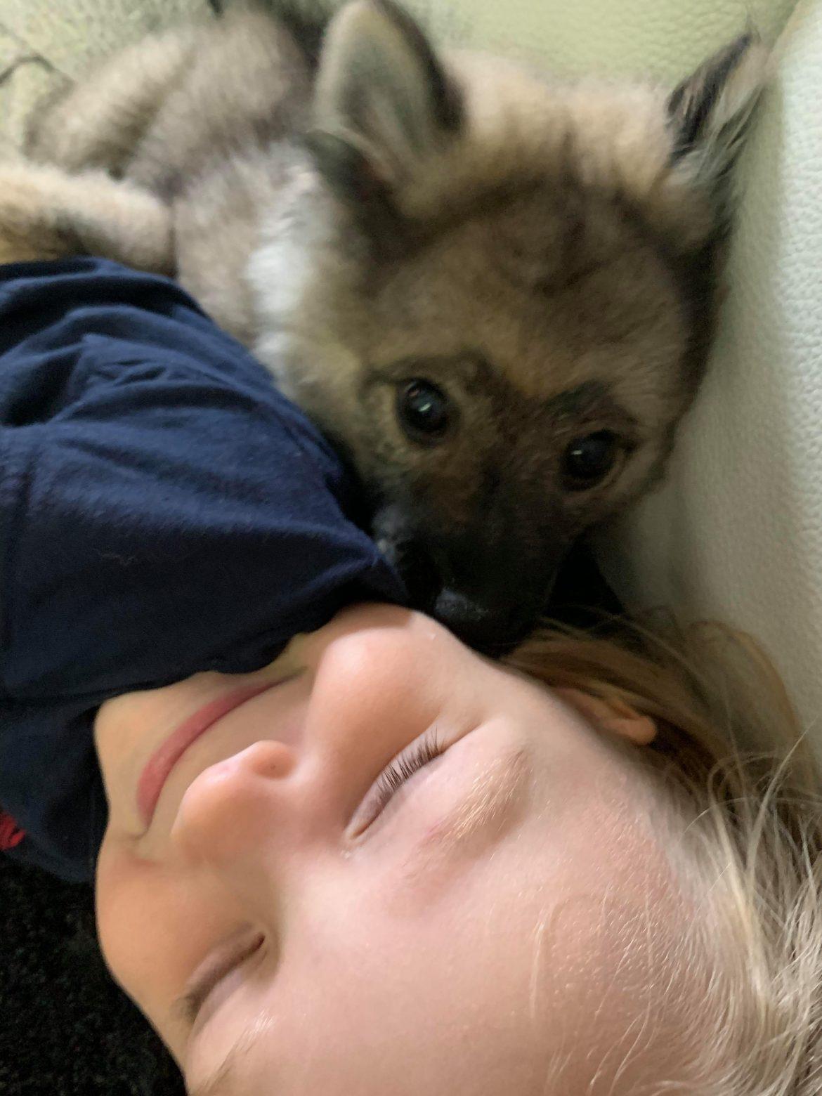 elainte viikko koira ja lapsi