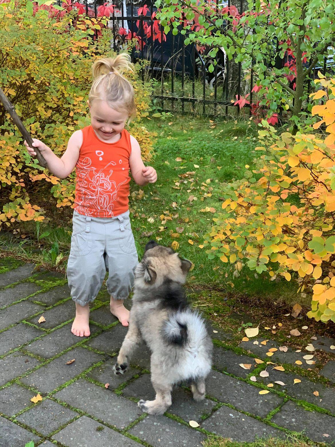 tytto ja koira leikkivät