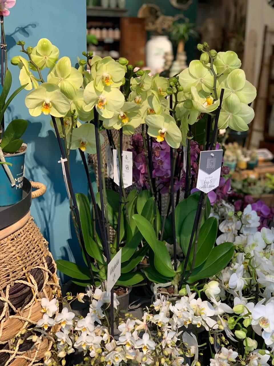 kauniainen kukkakauppa